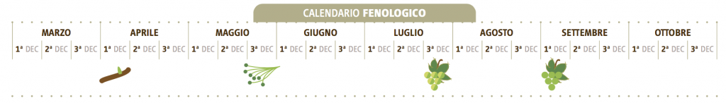 calendario fenologico catarratto