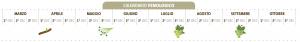 calendario fenologico grecanico